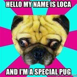 Perplexed Pug - Hello my name is Loca and I'm a special pug