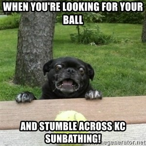 Ermahgerd Pug - When you're looking for your ball And stumble across KC sunbathing!