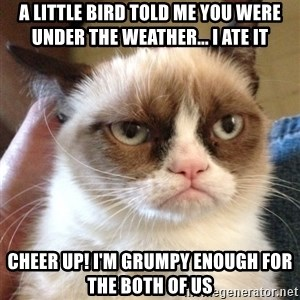 Grumpy Cat 2 - A little bird told me you were under the weather... I ate it Cheer up! I'm grumpy enough for the both of us