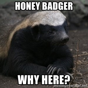 Honey Badger - honey badger why here?