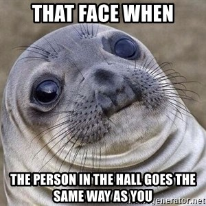 Awkward Seal - that face when the person in the hall goes the same way as you