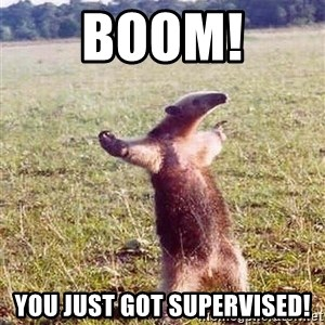 Anteater - BOOM! you just got supervised!