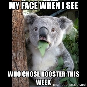 Koala can't believe it - My face when I see who chose rooster this week