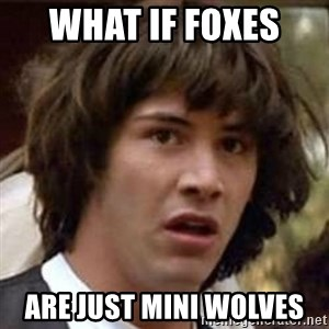 Conspiracy Keanu - what if foxes  are just mini wolves
