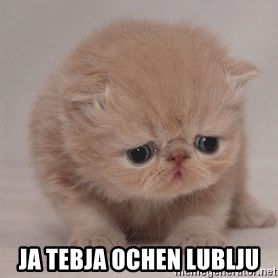Super Sad Cat - Ja tebja ochen lublju