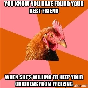 Anti Joke Chicken - You know you have found your best friend when she's willing to keep your chickens from freezing