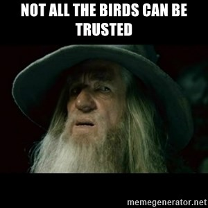 no memory gandalf - Not all the birds can be trusted