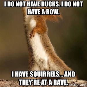 dramatic squirrel - I do not have ducks. I do not have a row. I have squirrels... and they're at a rave.