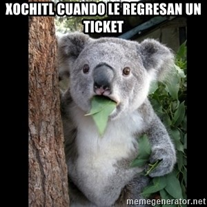 Koala can't believe it - Xochitl cuando le regresan un ticket