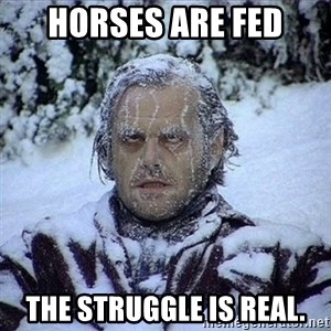 Frozen Jack - Horses are fed the struggle is real.