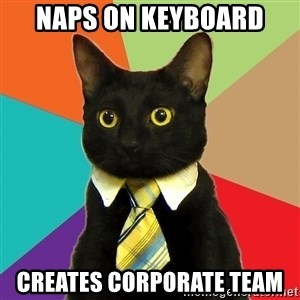 Business Cat - naps on keyboard creates corporate team