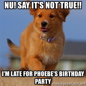 Ridiculously Photogenic Puppy - NU! SAY IT'S NOT TRUE!! I'M LATE FOR PHOEBE'S BIRTHDAY PARTY