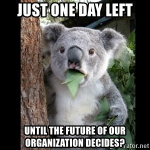 Koala can't believe it - just one day left until the future of our organization decides?