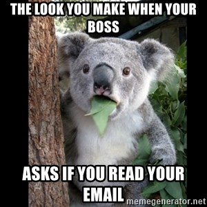 Koala can't believe it - the look you make when your boss asks if you read your email