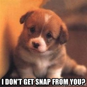 cute puppy - I don't get snap from you?