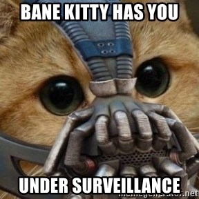 bane cat - bane kitty has you under surveillance
