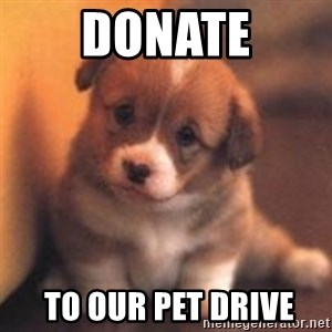 cute puppy - donate  to our pet drive