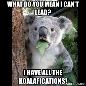 Koala can't believe it - what do you mean I can't lead? I have all the koalafications!