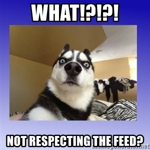 Dog Surprise - What!?!?! not respecting the feed?