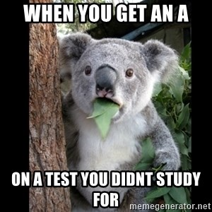 Koala can't believe it - when you get an A on a test you didnt study for