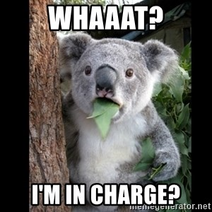 Koala can't believe it - Whaaat? I'm in charge?