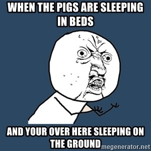 Y U No - WHEN THE PIGS ARE SLEEPING IN BEDS AND YOUR OVER HERE SLEEPING ON THE GROUND