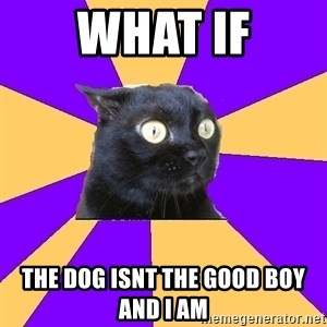 Anxiety Cat - What if The dog isnt the good boy and i Am