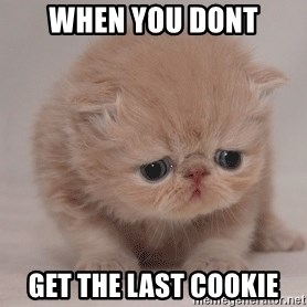 Super Sad Cat - when you dont get the last cookie