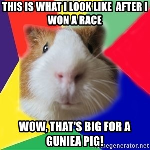 Typical guinea pig - This is what i look like  after i won a race  wow, that's big for a guniea pig!