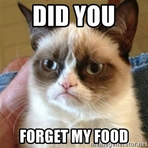 Grumpy Cat  - Did you  Forget my food