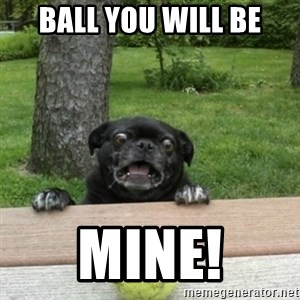 Ermahgerd Pug - Ball you will be Mine!
