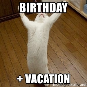 praise the lord cat - BIRTHDAY + VACATION