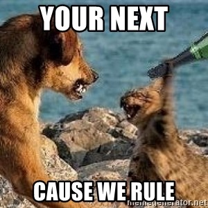 cats v dogs - YOUR NEXT  CAUSE WE RULE