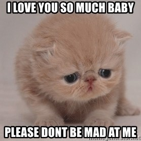 Super Sad Cat - i love you so much baby please dont be mad at me