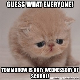 Super Sad Cat - Guess what everyone! Tommorow is only Wednessday of school!
