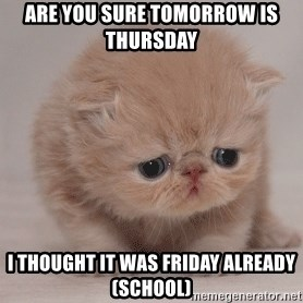 Super Sad Cat - Are you sure tomorrow is Thursday  I thought it was Friday already (school)