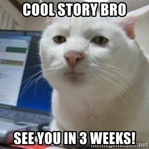 Serious Cat - cool story bro see you in 3 weeks!