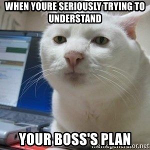 Serious Cat - when youre seriously trying to understand  your boss's plan