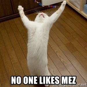 praise the lord cat - No one likes mez