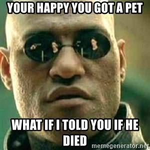What If I Told You - your happy you got a pet what if i told you if he died