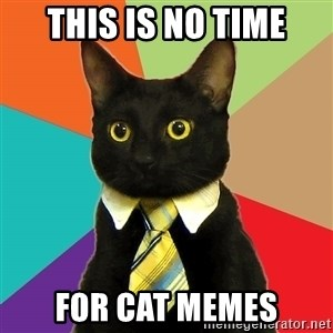 Business Cat - This is no time for cat memes