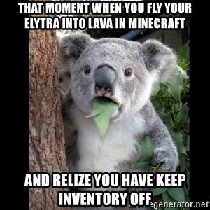 Koala can't believe it - that moment when you fly your elytra into lava in minecraft and relize you have keep inventory off