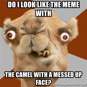Crazy Camel lol - Do I look like the meme with the camel with a messed up face?