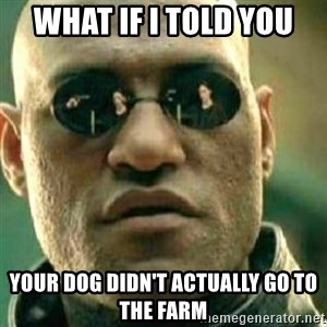 What If I Told You - what if i told you your dog didn't actually go to the farm