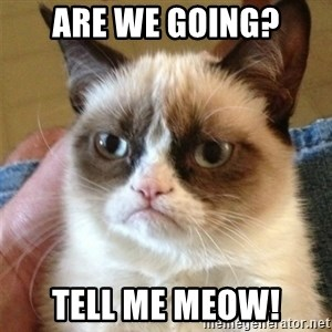 Grumpy Cat  - ARE WE GOING? TELL ME MEOW!