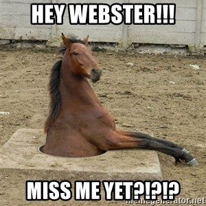 Hole Horse - Hey Webster!!! Miss me yet?!?!?