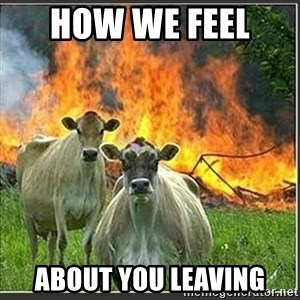 Evil Cows - How we feel  about you leaving