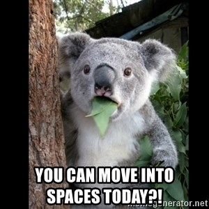 Koala can't believe it - You can move into                        SPACES today?!