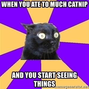 Anxiety Cat - when you ate to much catnip and you start seeing things