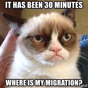 Grumpy Cat 2 - It has been 30 minutes where is my migration?